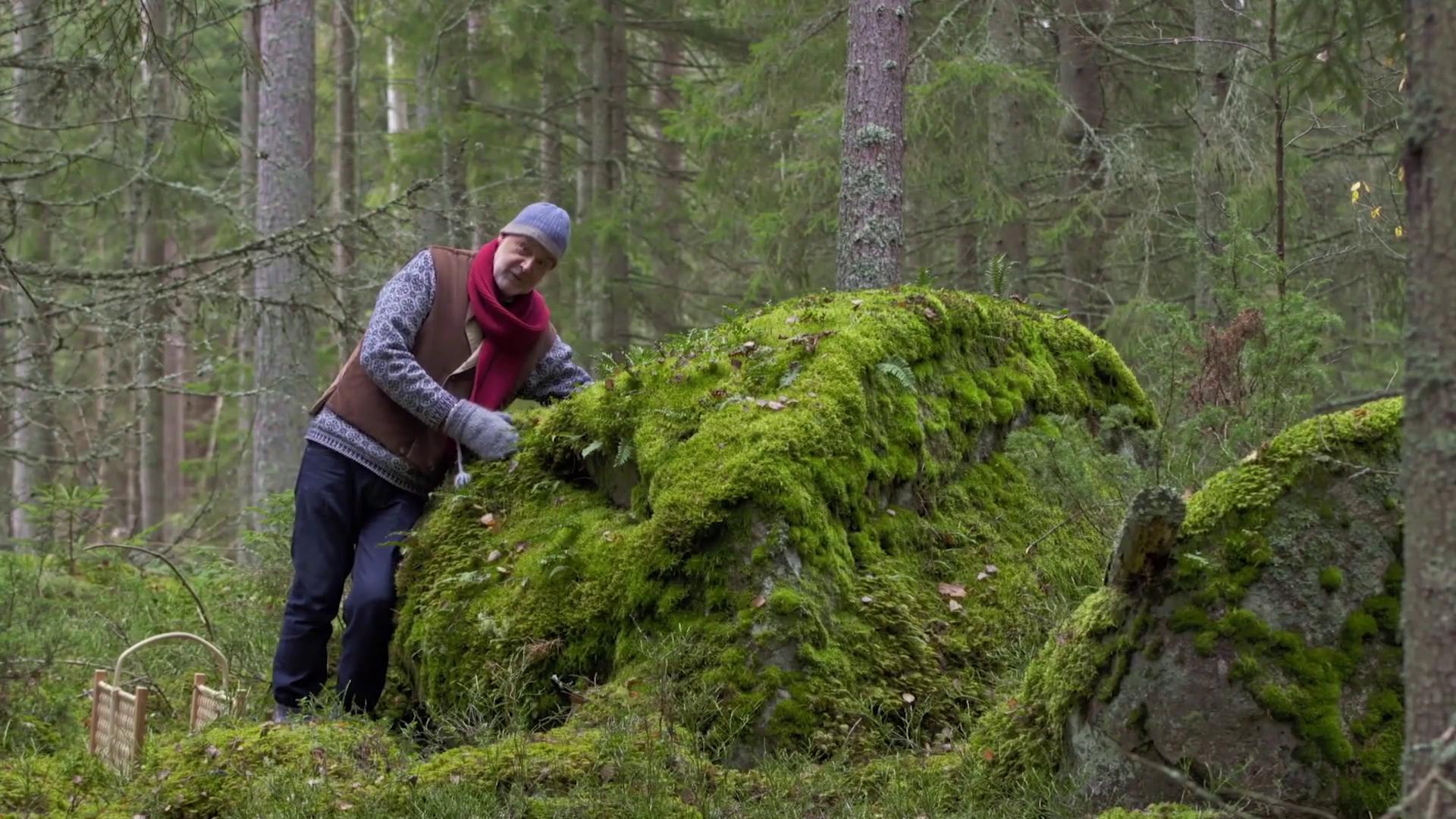"""Ernst Kirchsteiger: """"Därför är skogen min största inspirationskälla"""""""