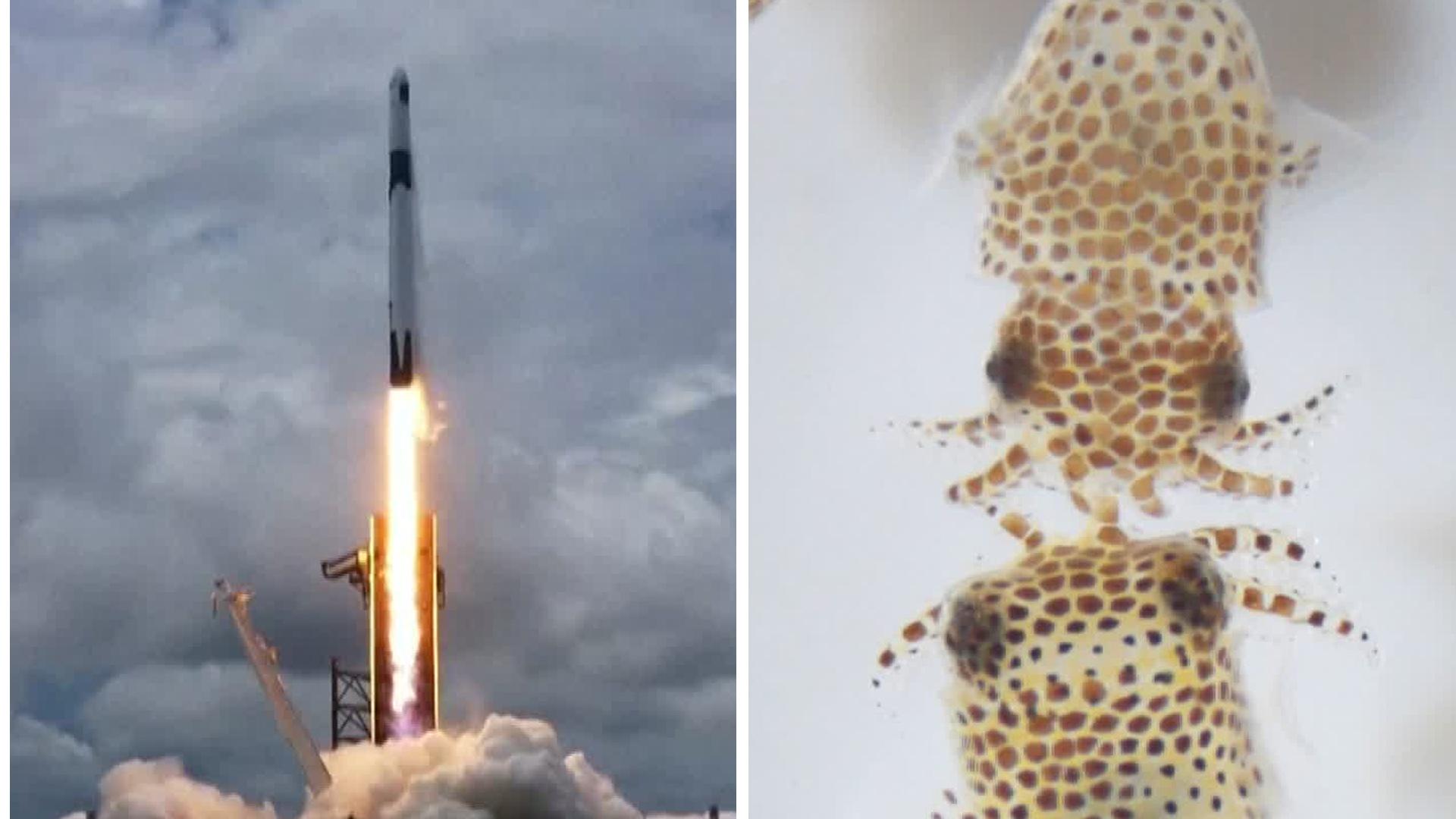 Bläckfiskungar skickas till internationella rymdstationen
